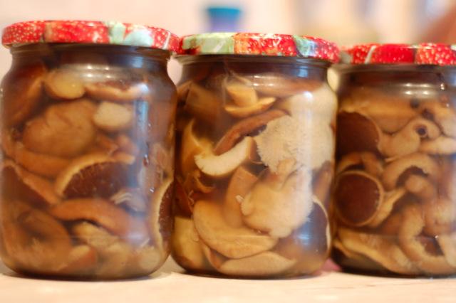 рецепты из рыжиков на зиму рецепты с фото