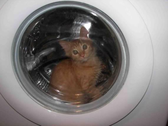 Машинка стиральная бош инструкция.